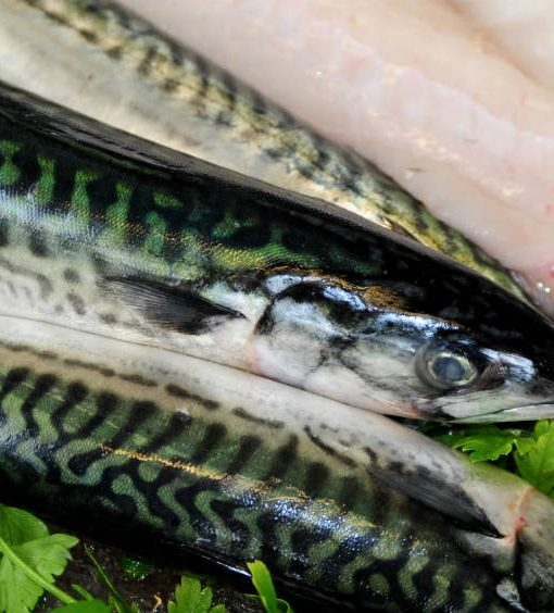 Mackerel Fresh Fish Berkshire